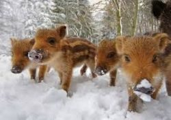 jabatos en nieve
