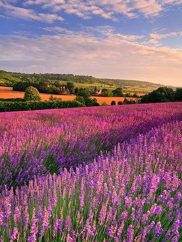 Countryside Kent