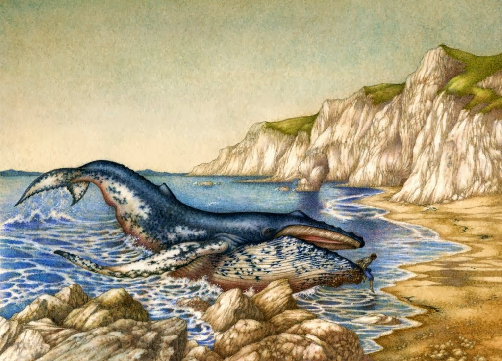 whale_by_himmapaan