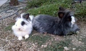 Blinky y Ravi de veraneo