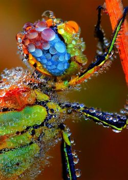Insecto de colores