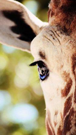 Ojo jirafa