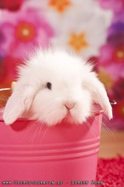 Bunny in pink