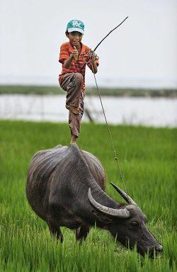 Niño y búfalo