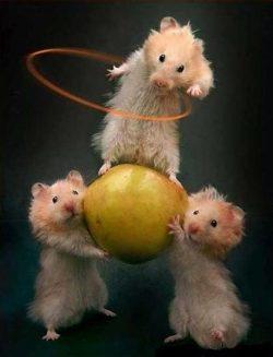 Mice circus